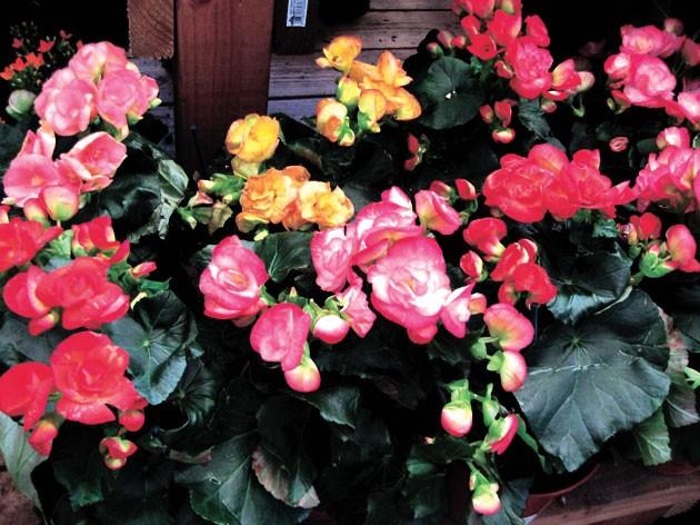 Необычные цветы из бисера схемы