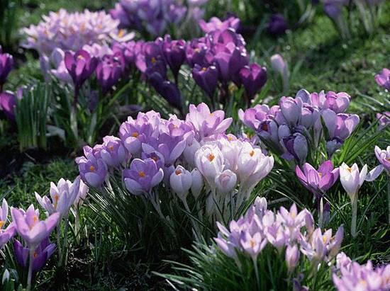 Цветы в саду и дома фото
